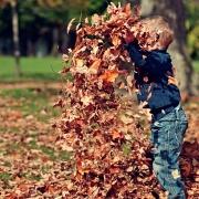 Tipps Rezepte Rezept Kräuter Herbst