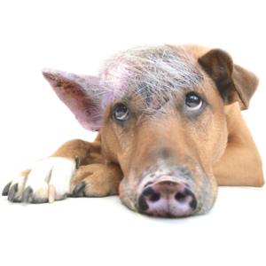 Sport Selbstmanagement Schweinehund Motivation Laufen