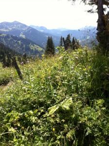 Balderschwang - Bergwiese auf einer Wanderung