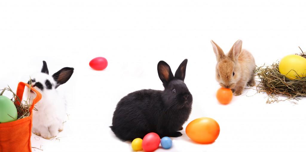 Keine Angst vor den Eiern des Osterhasen ©Sandra Brunsch/fotolia
