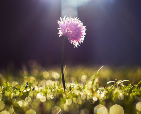 Wandern Natur Frühling Achtsamkeit