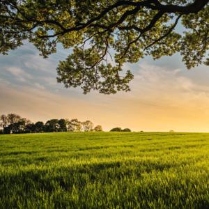 Wandern Natur mai Frühling Achtsamkeit