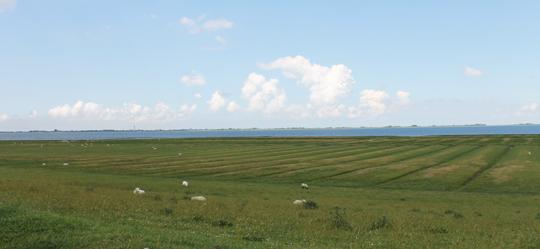 Schafe auf dem Deich in der Nähe von Husum