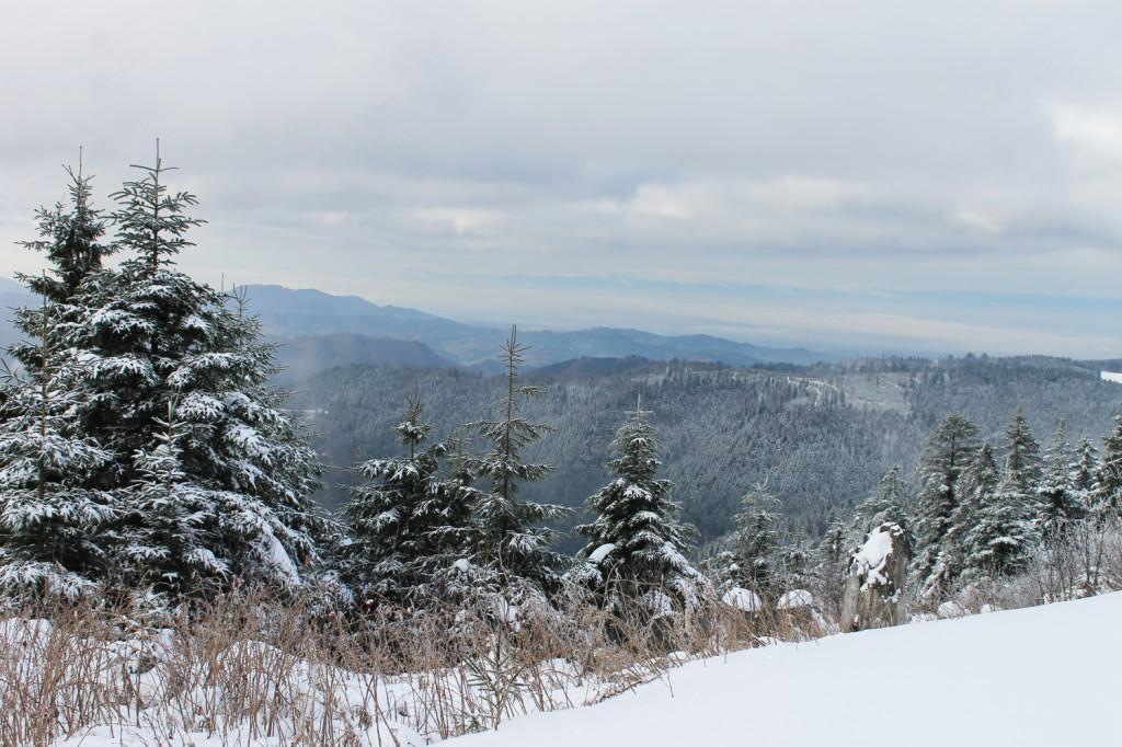 Nordic Walking im Schnee