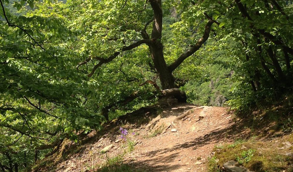 Beim Wandern gilt: Der Weg ist das Ziel - und der birgt Überraschungen an jeder Ecke.