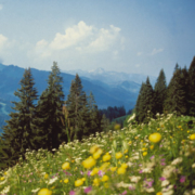 Wellnessurlaub Wandern Rothaargebirge Natur