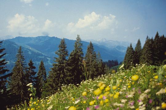 Landschaft in den Berge um das Hubertus Alpin Lodge & Spa