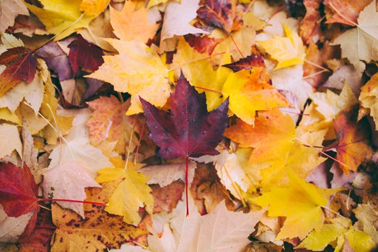 tanja Herbst